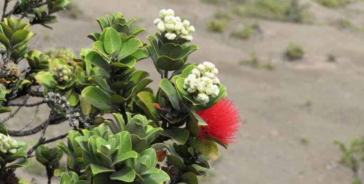 ハワイの鳥