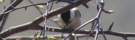 野辺山・清里に遠征(3)冬鳥たち