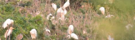 高速道路からサギのコロニー