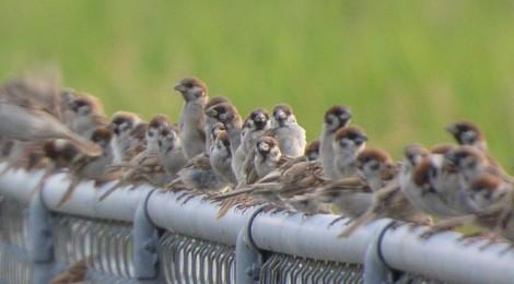 たわわな若鳥たち