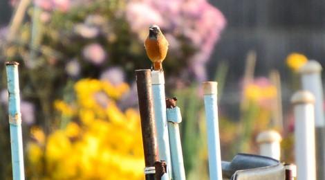 庭木の冬鳥