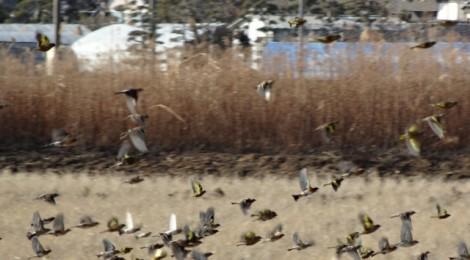 2013年の鳥見を振り返る