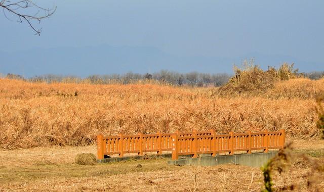 渡良瀬遊水池探訪