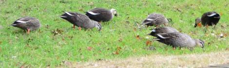 雨のそぼ降る公園の冬鳥