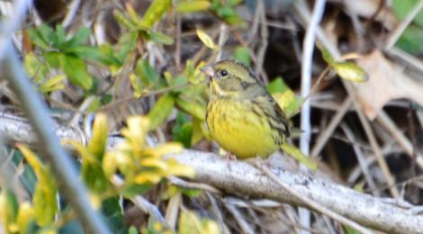 涸沼周辺の冬鳥たち