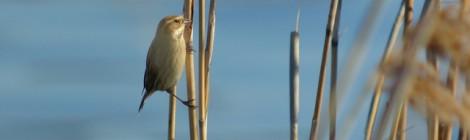 ノスリ幼鳥のトライアル
