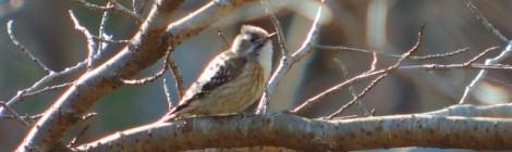 冬の小鳥満喫