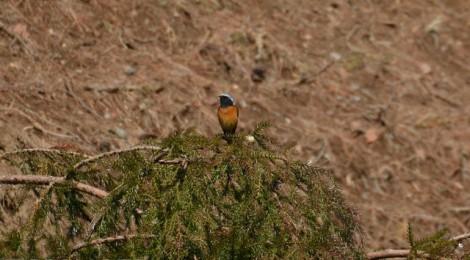 小木津山で小鳥探し(1)