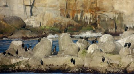 川尻港の海鳥たち