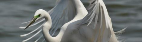 神栖の神の池ぶらり
