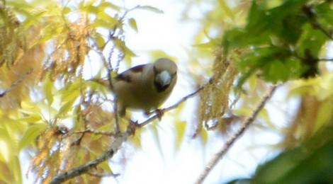 森の小鳥たち