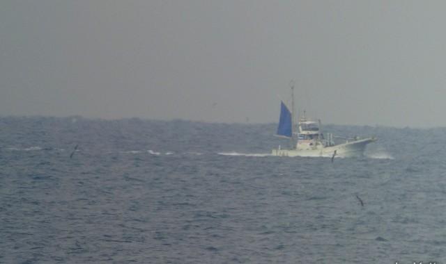 城ヶ島で海鳥観察