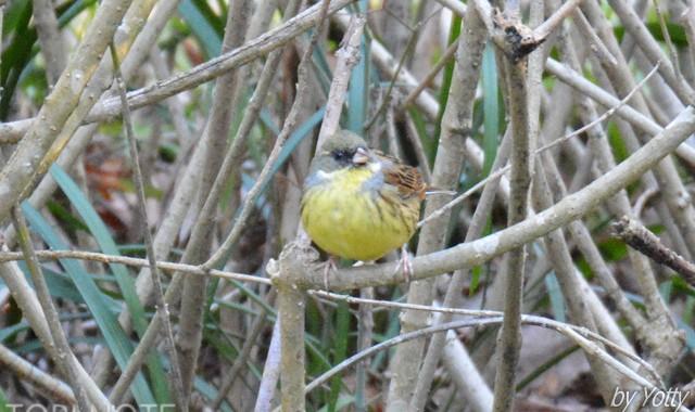 桜山、千波公園の冬鳥たち