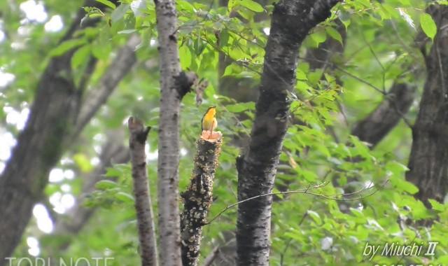 森に水辺に幼鳥