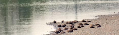 川沿いでアカゲラ、カケス、ノビタキ