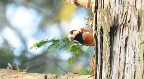 森の小鳥の冬支度