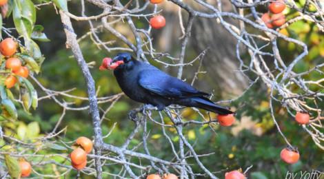 食事する鳥たち