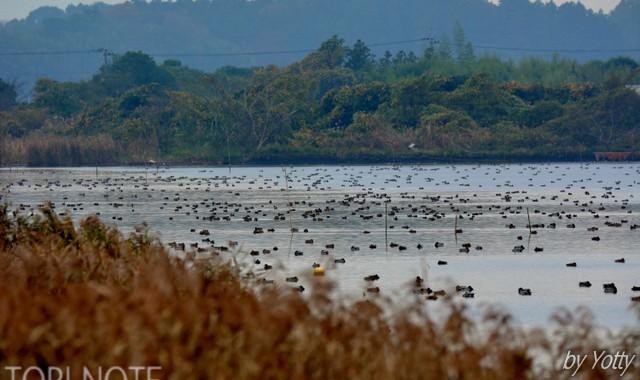 カモのいる涸沼の風景