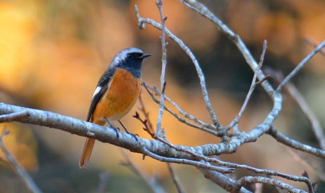 桜山の冬鳥たち