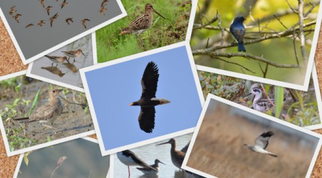 2015年の鳥見を振り返る