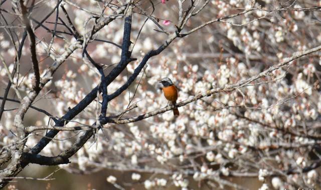 立春~春めいてきた鳥たち