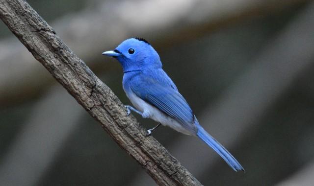 タイ中部の野鳥 Birds in Thailand (1)