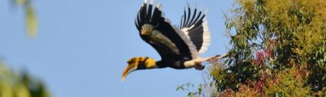 タイ中部の野鳥 Birds in Thailand (4)
