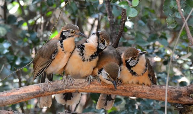 タイ中部の野鳥 Birds in Thailand (9)