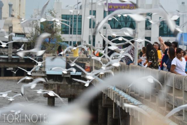 バンプー(Bang poo)はチャガシラカモメ舞う市民の憩いの場。