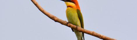 タイ中部の野鳥 Birds in Thailand (10)