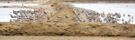 タイ中部の野鳥 Birds in Thailand (11)