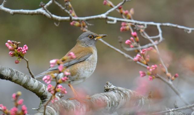 花と鳥たち~シロハラ、シジュウカラ