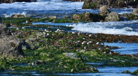 海辺のシギ・チドリ