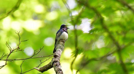 軽井沢野鳥の森(1)