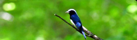 軽井沢野鳥の森(2)