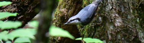 軽井沢野鳥の森(3)