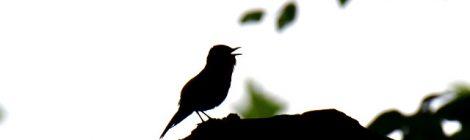 筑波山で夏鳥を探す