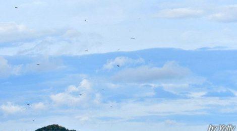 白樺峠(1)9月25日のタカ柱