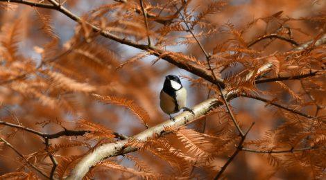紅葉、落ち葉と鳥たち