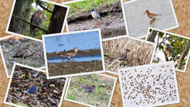 2016年の鳥見を振り返る