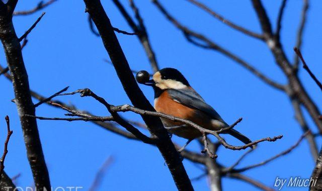冬の公園の小鳥たち