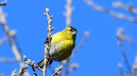 海浜公園の黄色い鳥