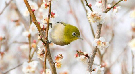 春めいてきた鳥たち