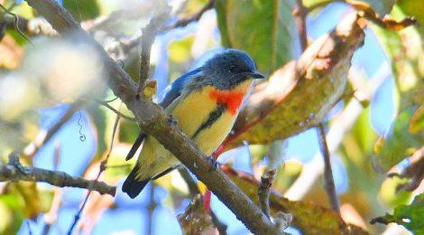 ネパールの野鳥 Birds in Nepal (2)