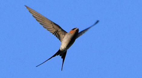 ネパールの野鳥 Birds in Nepal (12・了)