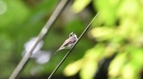 山の林で小鳥散策