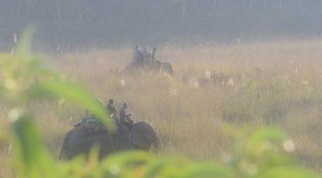 ゾウに乗って安全に湿地を縦断