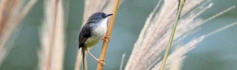 台湾紀行(2)~馬祖列島の鳥たち