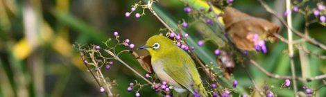 木の実と小鳥