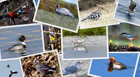 2017年の鳥見を振り返る